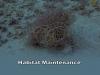 16-Reef-Maintenence