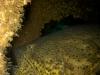 goliath-grouper-jax-reef-jpg
