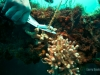 reef-clean-fishing-line