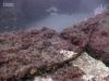 east-coast-reef