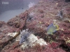 forida-lionfish-invasion