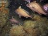 high-hat-fish