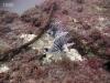 north-florida-lionfish