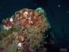 Desco - St. Augustine Reef