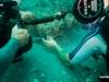 tisiri-underwater-discovey-channel