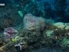 Culvert Reef Sponge