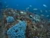 Culvert Reef Growth