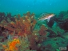 Seabass and coral growth