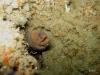 hh-moray-eel-jacksonville-reef