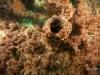 9-reef-growth-jacksonville