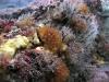jacksonville-reef-growth