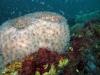 jacksonville-reef-sponge