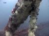 north-florida-reef