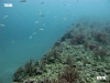 lee-county-artificial-reef
