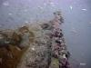 hopper-reef-bait