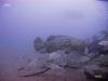 hopper-reef-goliath-grouper
