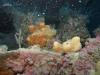 hopper-reef-sponge