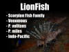 2 Lionfish Description