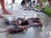 lionfish-hunt-harvest