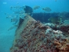 Little Barge Reef, St Augustine, port side
