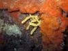 Sponge and Anemones