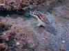open-bargeseabass-flounder