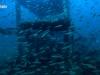 Press Box Reef