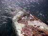 8-barge-reef-st-augustine