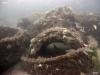Taylor Reef, St. Augustine, reef pile