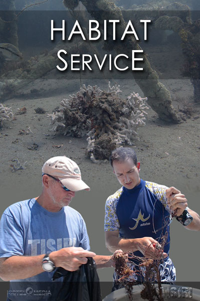 Reef Service